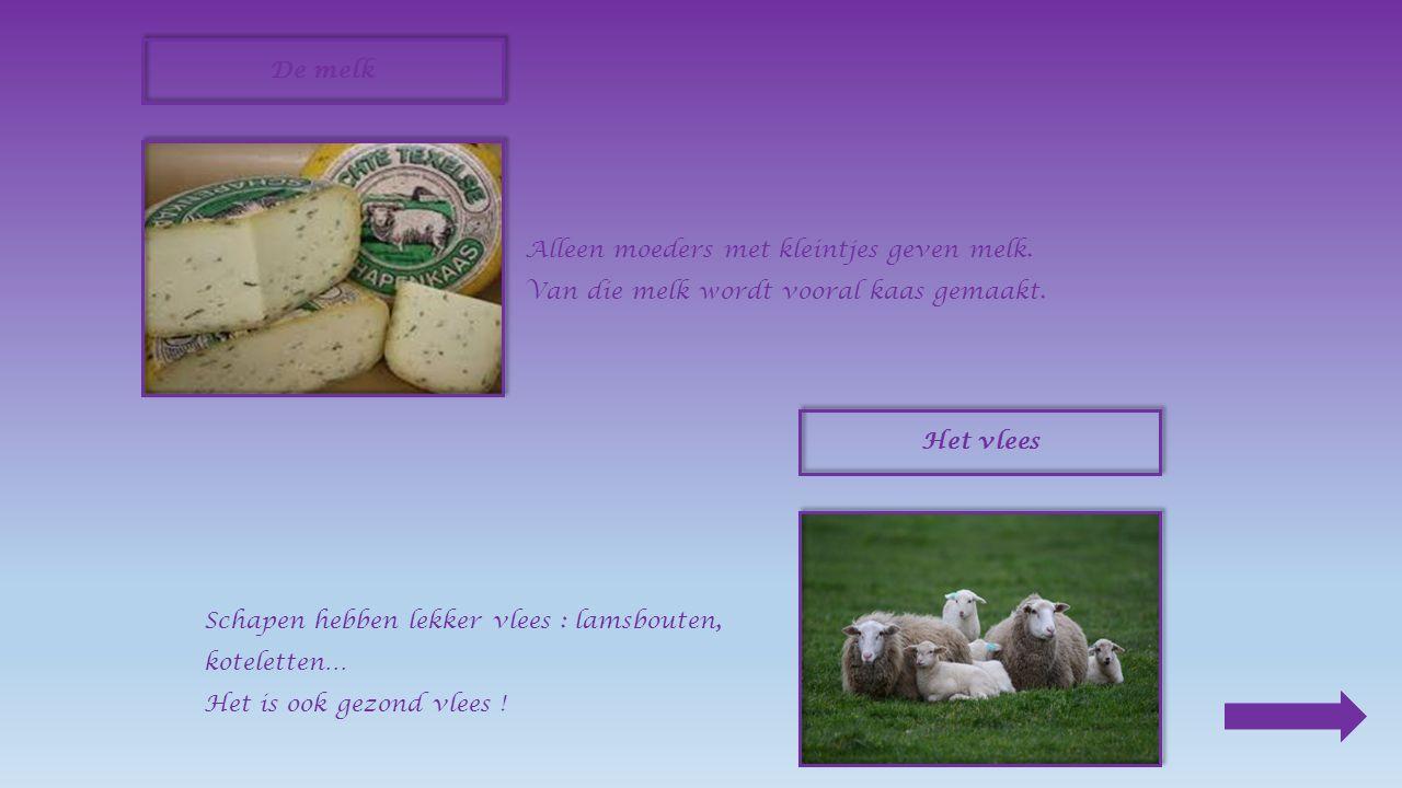 Het schaap en zijn producten De wol Op het einde van de lente wordt het schaap geschoren.