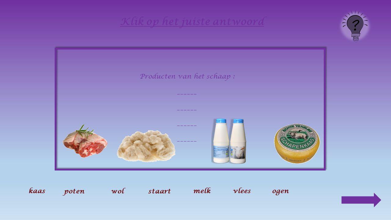 De melk Alleen moeders met kleintjes geven melk. Van die melk wordt vooral kaas gemaakt.