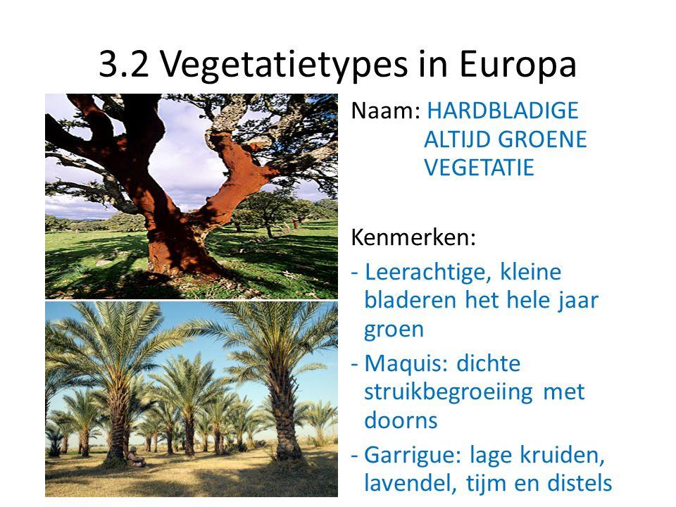 3.2 Vegetatietypes in Europa Naam: HARDBLADIGE ALTIJD GROENE VEGETATIE Kenmerken: - Leerachtige, kleine bladeren het hele jaar groen -Maquis: dichte s
