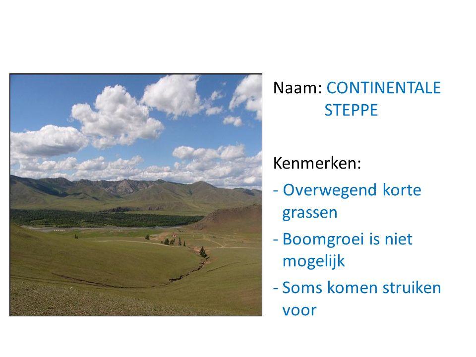 Naam: CONTINENTALE STEPPE Kenmerken: - Overwegend korte grassen -Boomgroei is niet mogelijk -Soms komen struiken voor