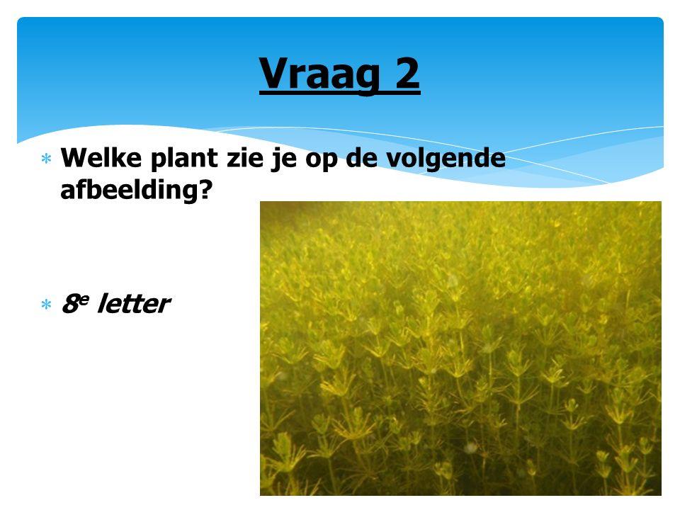 Vraag 2  Welke plant zie je op de volgende afbeelding?  8 e letter