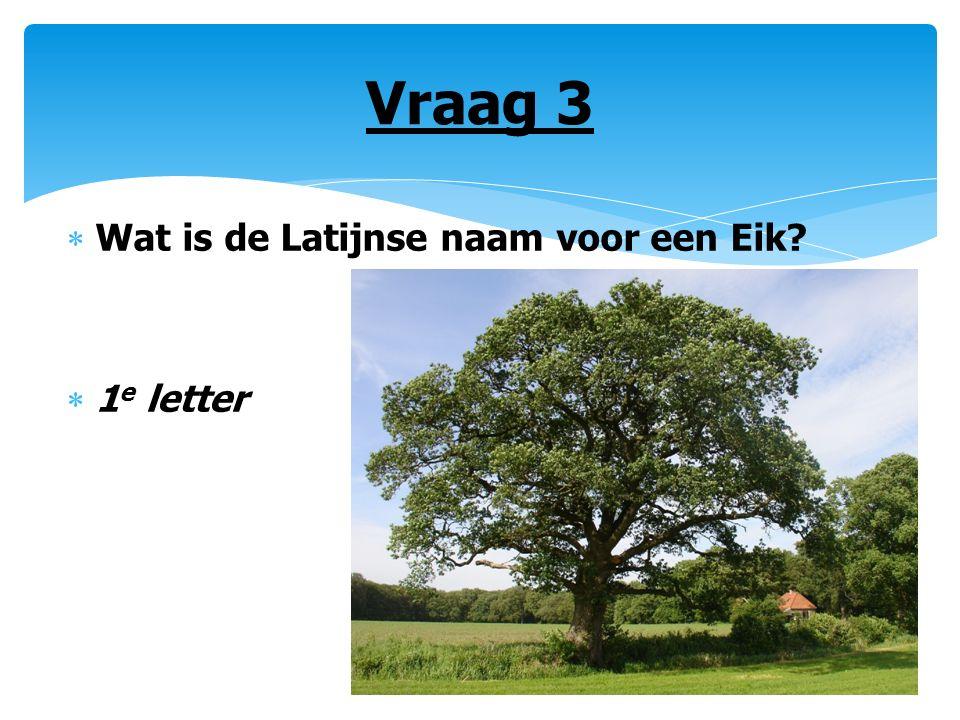 Vraag 3  Wat is de Latijnse naam voor een Eik?  1 e letter