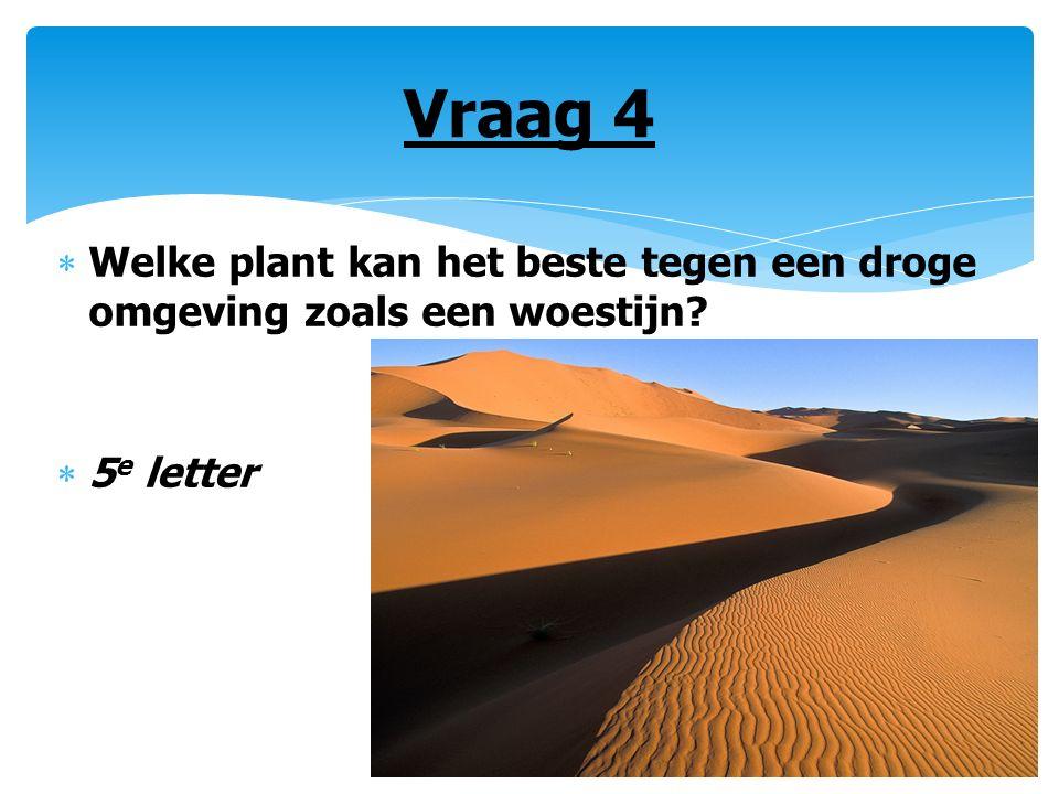 Vraag 4  Welke plant kan het beste tegen een droge omgeving zoals een woestijn?  5 e letter