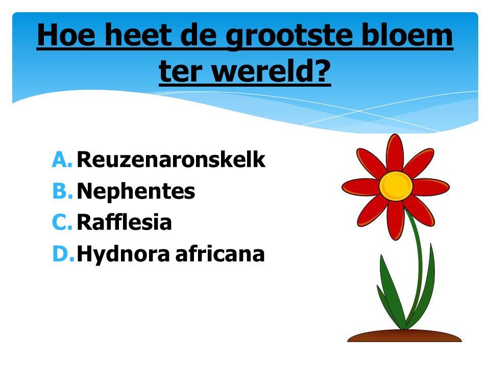 A.Reuzenaronskelk B.Nephentes C.Rafflesia D.Hydnora africana Hoe heet de grootste bloem ter wereld?