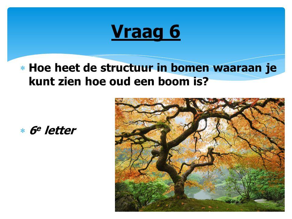 Vraag 6  Hoe heet de structuur in bomen waaraan je kunt zien hoe oud een boom is?  6 e letter
