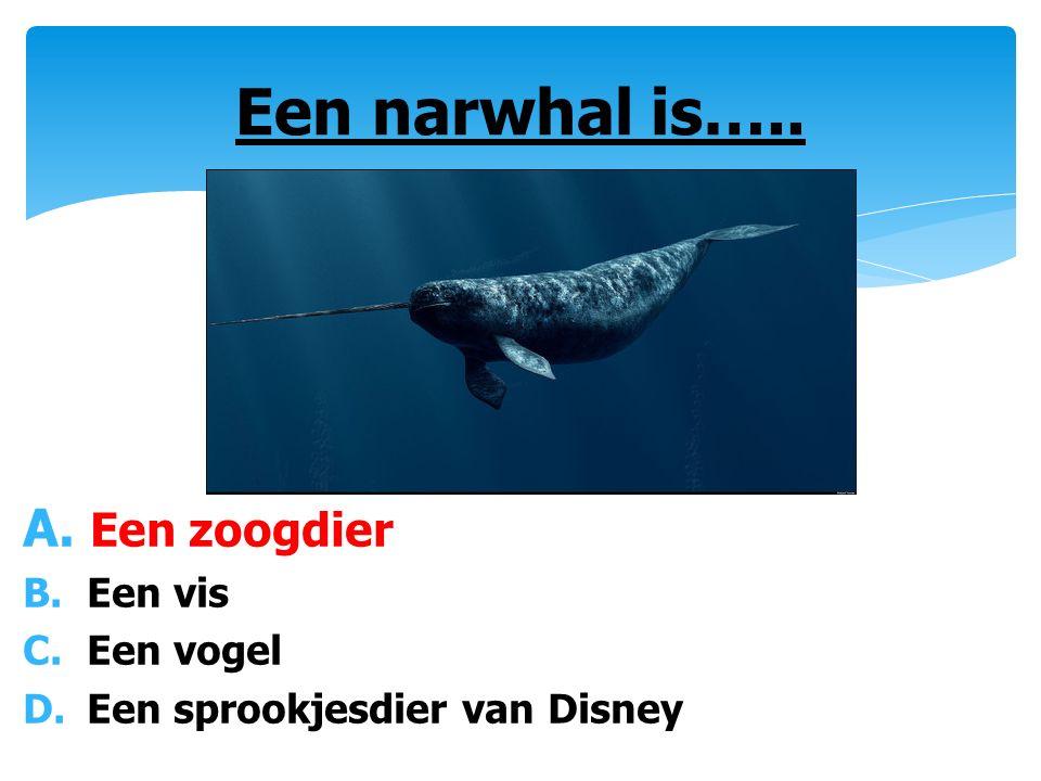A. Een zoogdier B. Een vis C. Een vogel D. Een sprookjesdier van Disney Een narwhal is…..