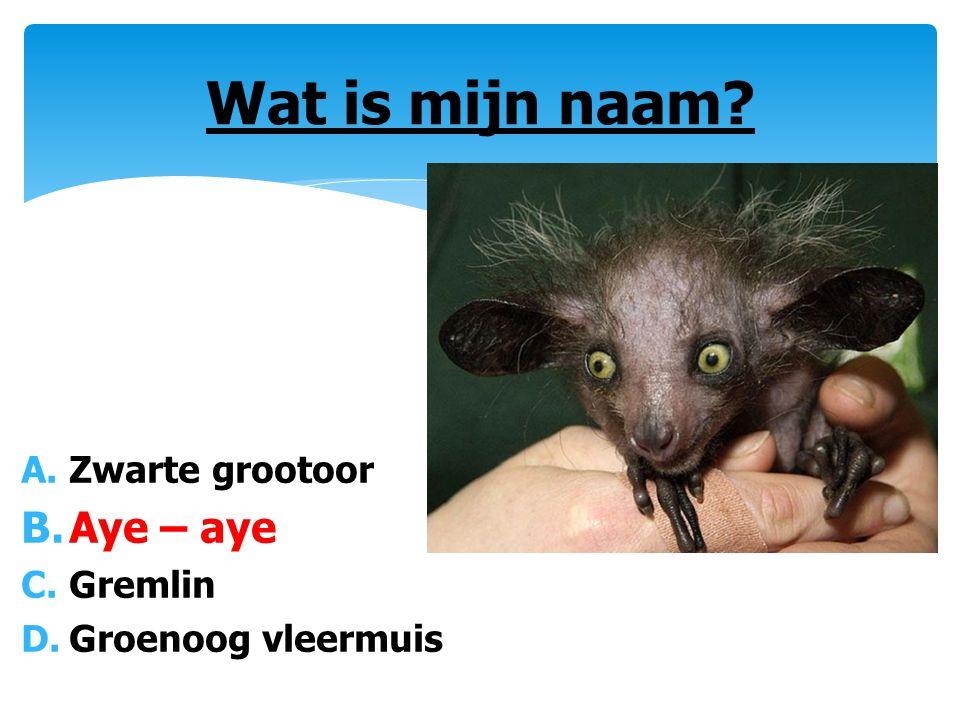 A.Zwarte grootoor B.Aye – aye C.Gremlin D.Groenoog vleermuis Wat is mijn naam?