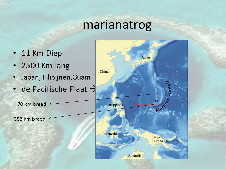 marianatrog 11 Km Diep 2500 Km lang Japan, Filipijnen,Guam de Pacifische Plaat  onder de Filipijnse Plaat 70 km breed 388 km breed