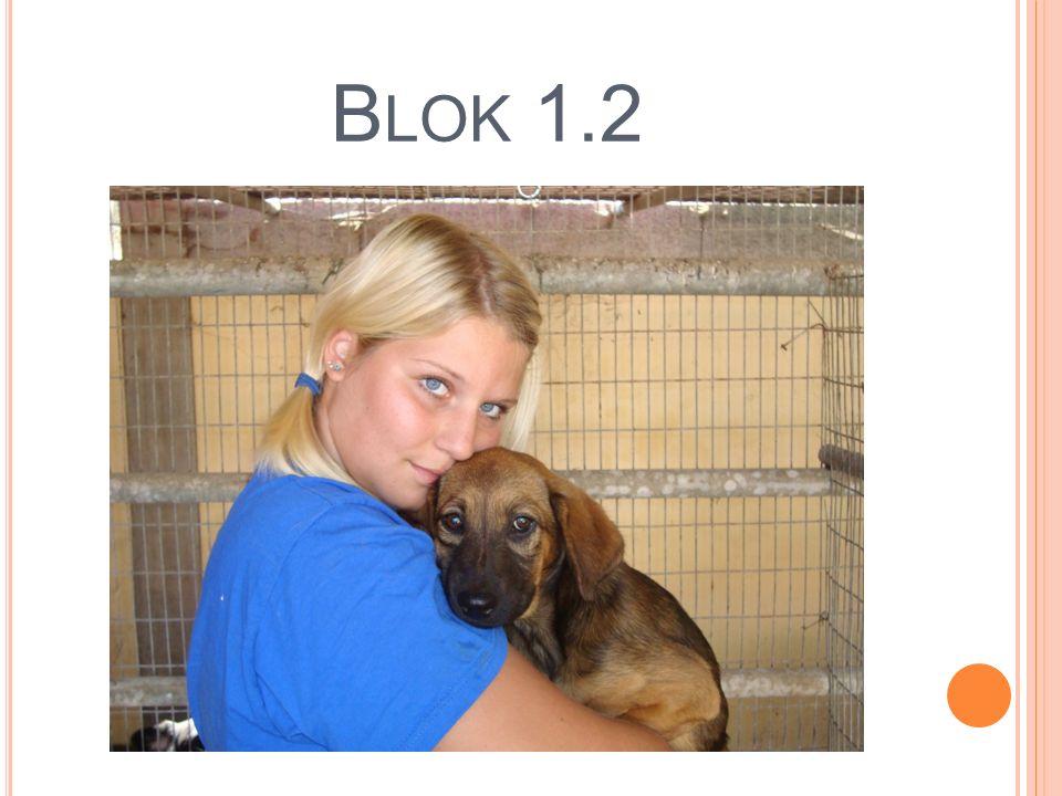 B LOK 1.2
