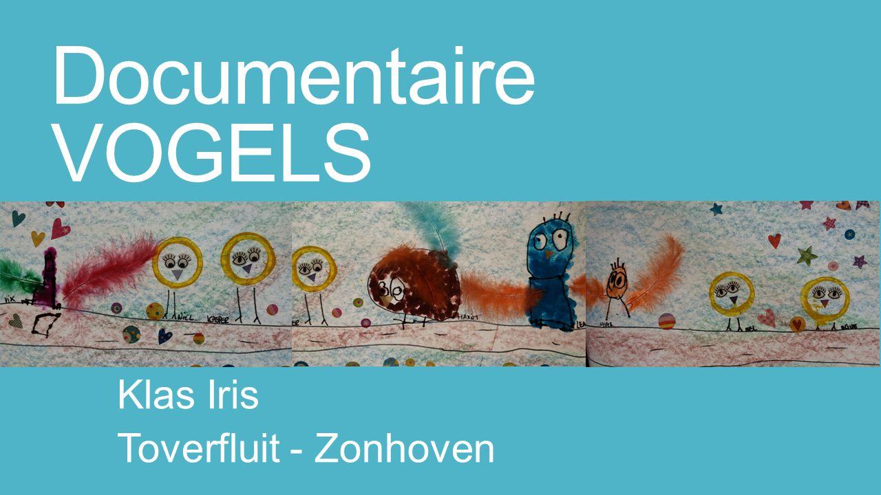 Documentaire VOGELS Klas Iris Toverfluit - Zonhoven