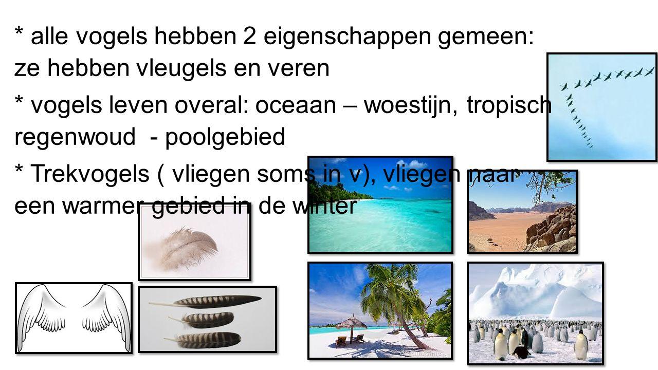 Vogelnestje 5 Elias, Kasper V, Elien, ARwen