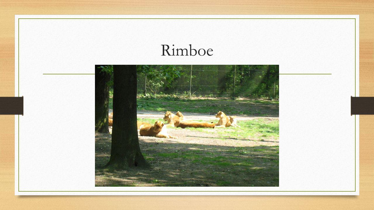 Rimboe