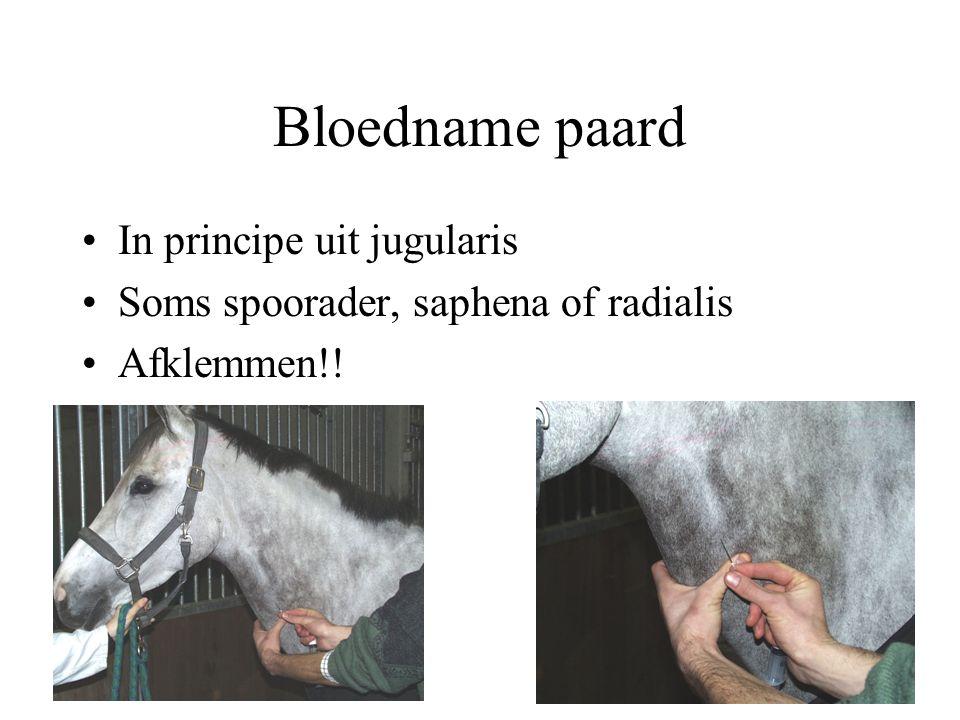 Bloedname paard In principe uit jugularis Soms spoorader, saphena of radialis Afklemmen!!