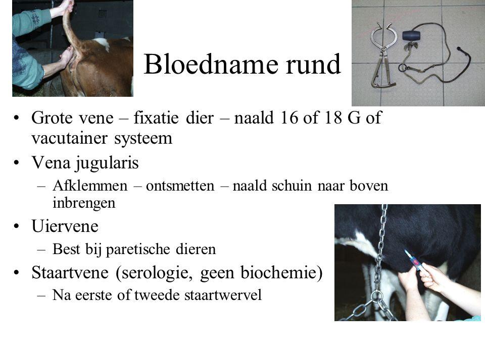Bloedname rund Grote vene – fixatie dier – naald 16 of 18 G of vacutainer systeem Vena jugularis –Afklemmen – ontsmetten – naald schuin naar boven inb