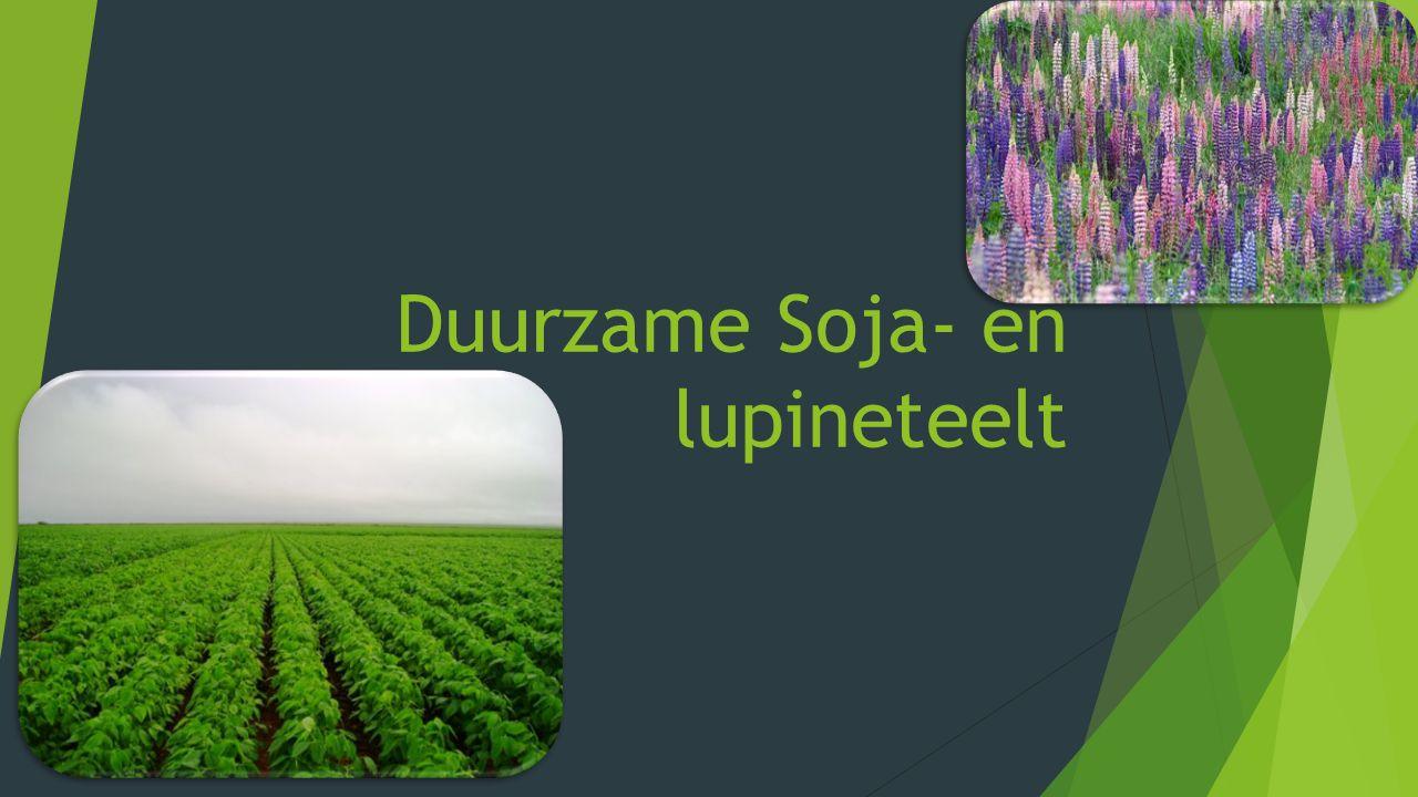 Het idee  Boeren zaaien Soja of Lupine op akkerranden of percelen.