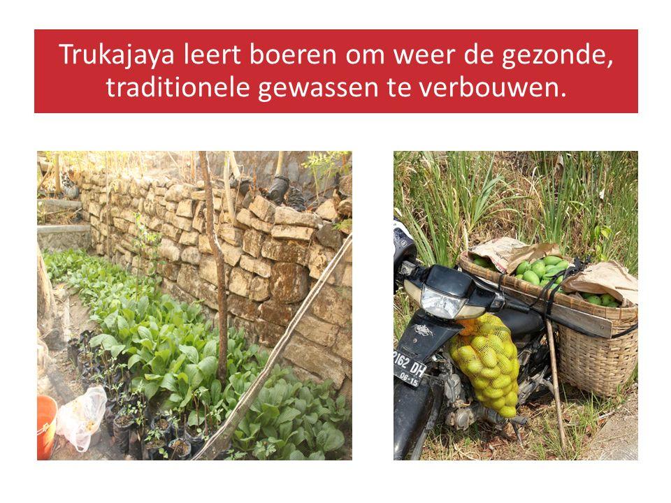 Trukajaya leert boeren om weer de gezonde, traditionele gewassen te verbouwen.