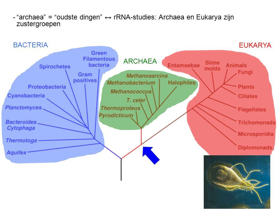 Woese et al., 1990 BACTERIA ARCHAEA EUKARYA - archaea = oudste dingen ↔ rRNA-studies: Archaea en Eukarya zijn zustergroepen