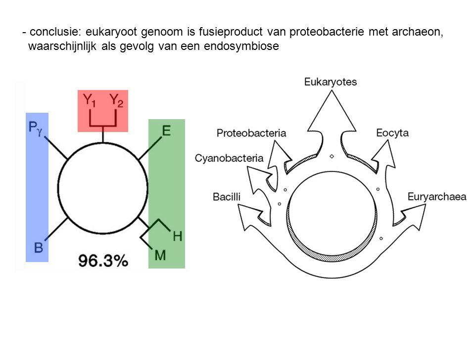 - conclusie: eukaryoot genoom is fusieproduct van proteobacterie met archaeon, waarschijnlijk als gevolg van een endosymbiose