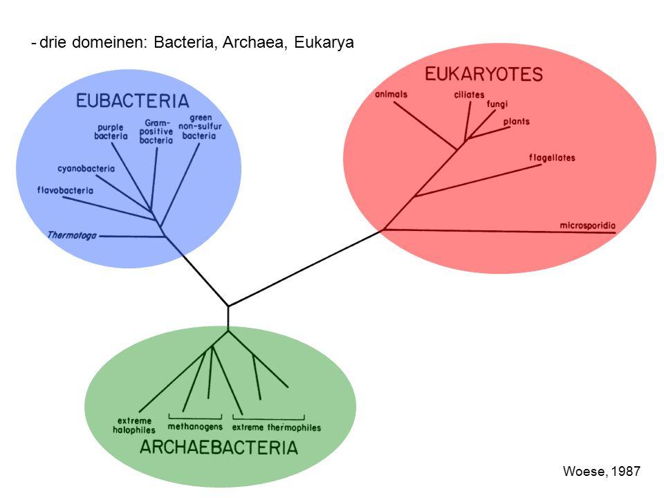 -drie domeinen: Bacteria, Archaea, Eukarya Woese, 1987