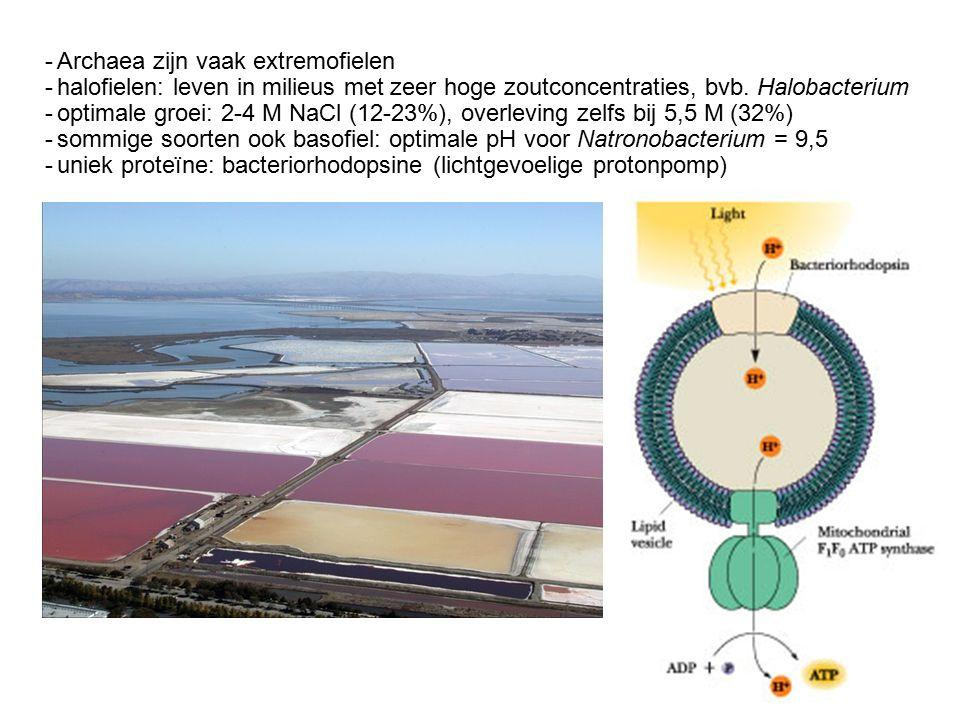 -Archaea zijn vaak extremofielen -halofielen: leven in milieus met zeer hoge zoutconcentraties, bvb.