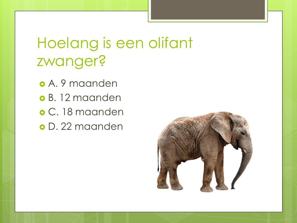 Hoelang is een olifant zwanger?  A. 9 maanden  B. 12 maanden  C. 18 maanden  D. 22 maanden