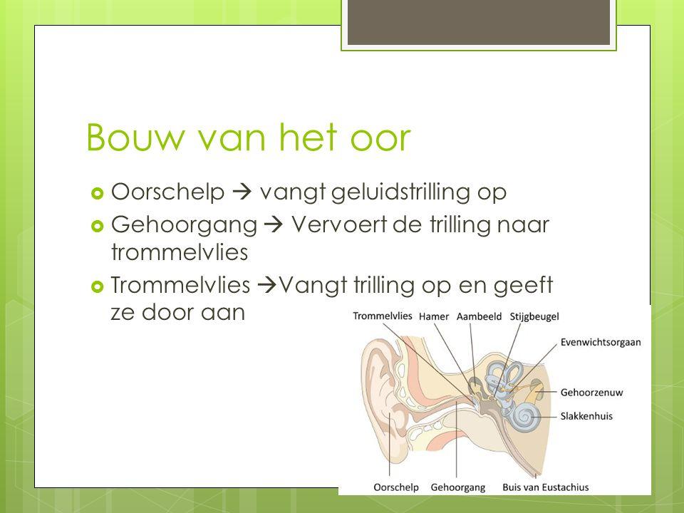 Bouw van het oor  Oorschelp  vangt geluidstrilling op  Gehoorgang  Vervoert de trilling naar trommelvlies  Trommelvlies  Vangt trilling op en geeft ze door aan