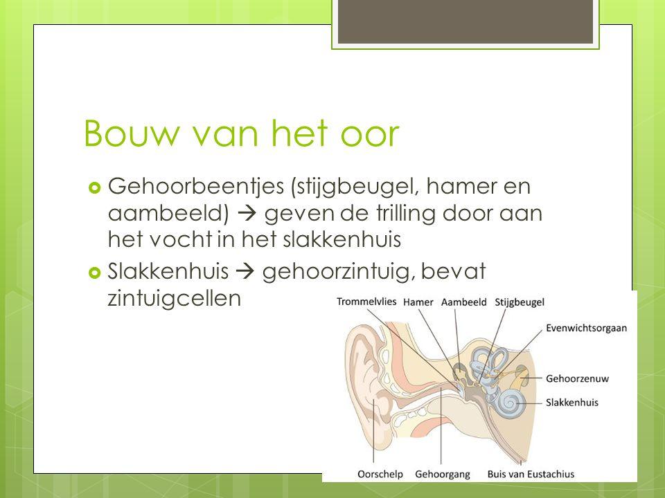 Bouw van het oor  Gehoorbeentjes (stijgbeugel, hamer en aambeeld)  geven de trilling door aan het vocht in het slakkenhuis  Slakkenhuis  gehoorzintuig, bevat zintuigcellen