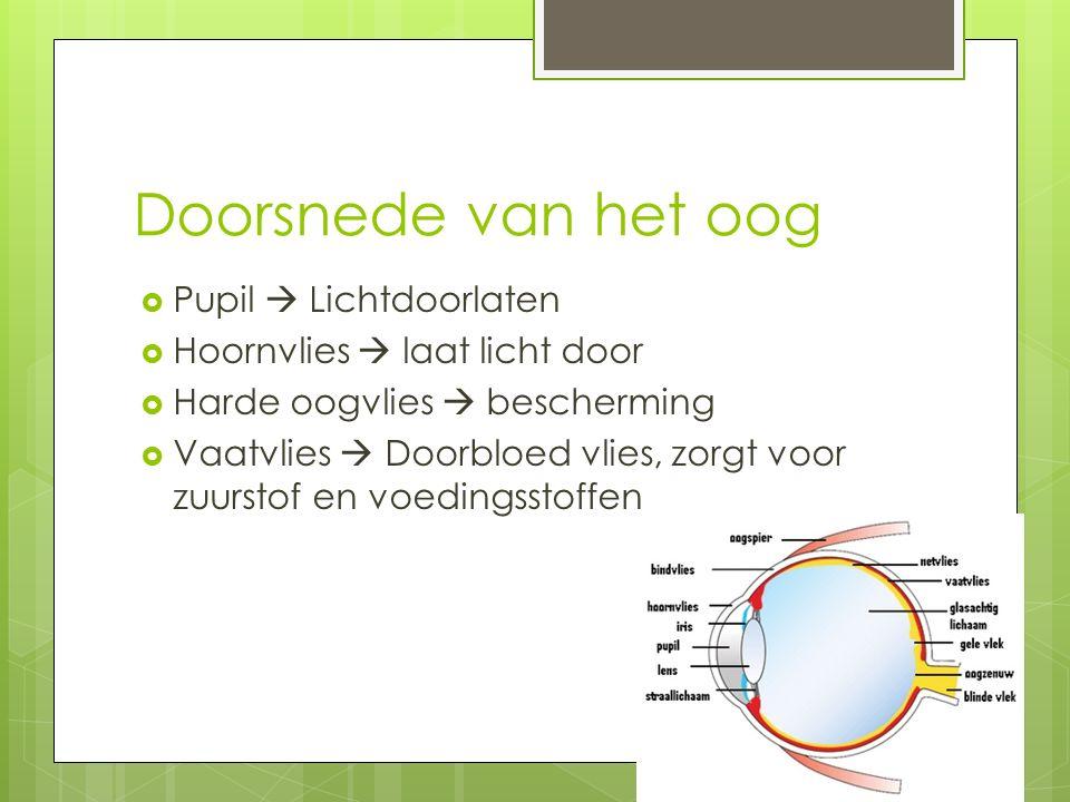 Doorsnede van het oog  Pupil  Lichtdoorlaten  Hoornvlies  laat licht door  Harde oogvlies  bescherming  Vaatvlies  Doorbloed vlies, zorgt voor zuurstof en voedingsstoffen