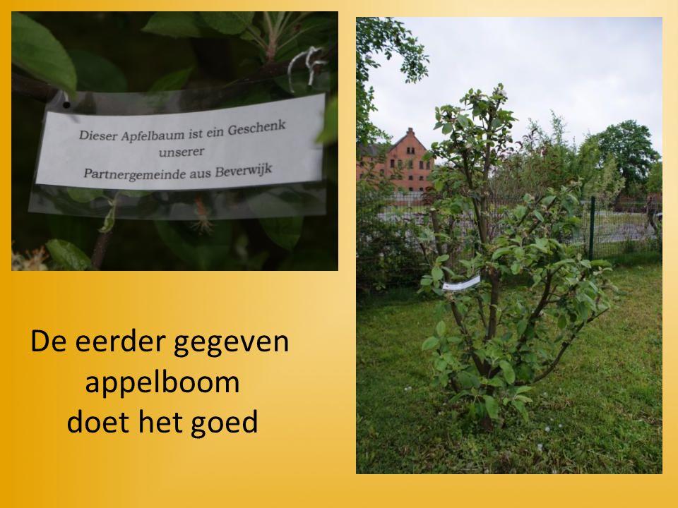 De eerder gegeven appelboom doet het goed