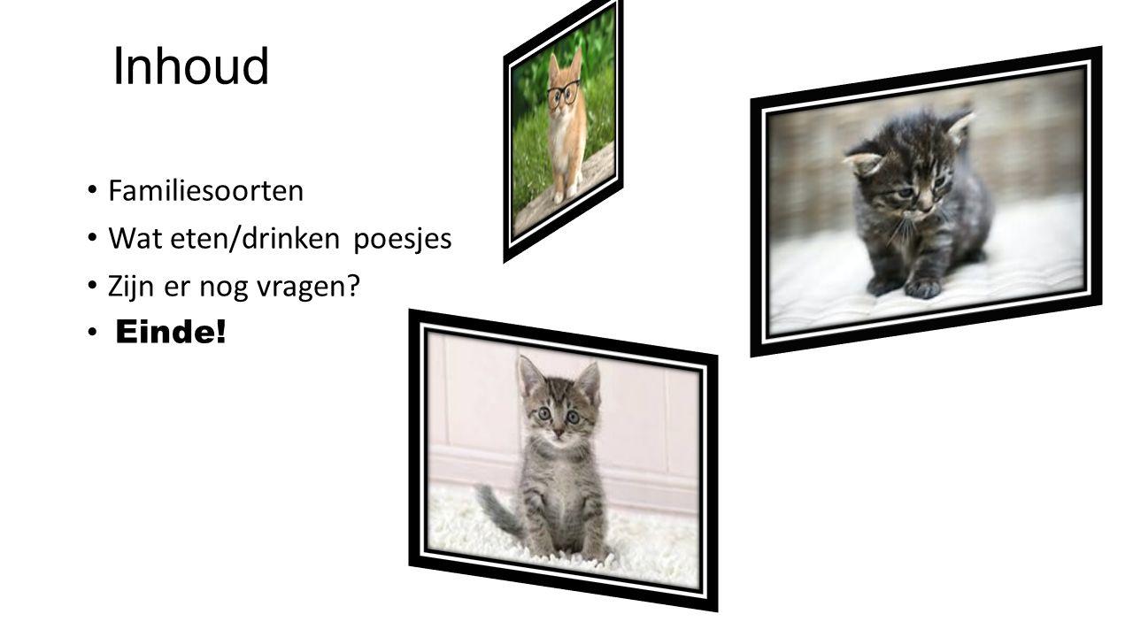 Kortharige katten Langharige katten Naakte katten (zonder haar) Schildpad katten De Iberische lynx (is de zeldaamste kattensoort ter wereld er zijn er nog maar 3 op de hele wereld.