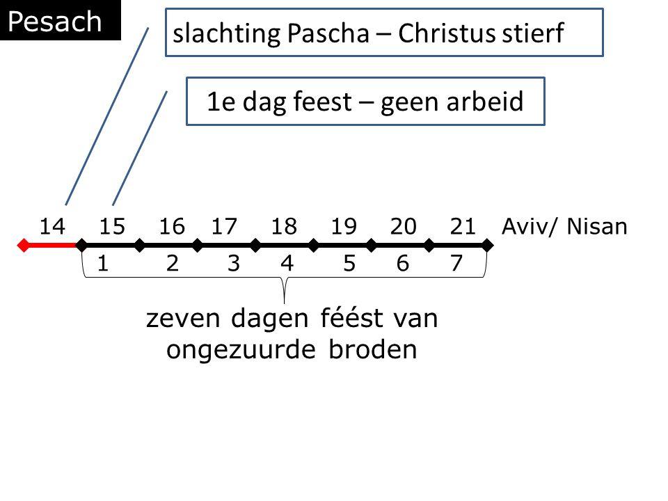 Pesach 14 15 16 17 18 19 20 21 Aviv/ Nisan 1 2 3 4 5 6 7 zeven dagen féést van ongezuurde broden slachting Pascha – Christus stierf 1e dag feest – geen arbeid