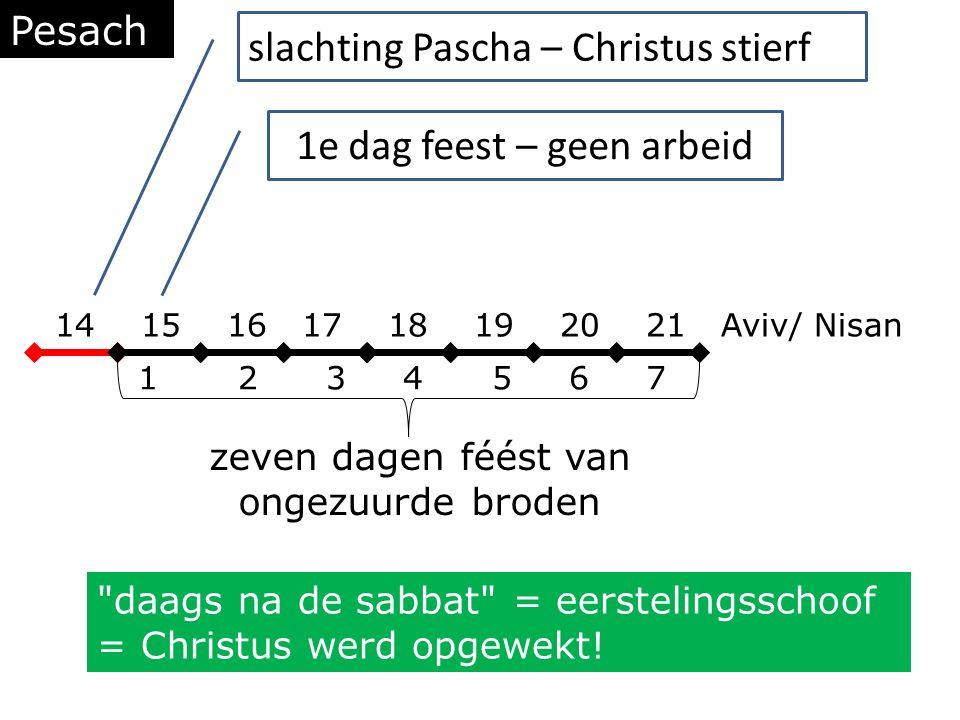 Pesach 14 15 16 17 18 19 20 21 Aviv/ Nisan 1 2 3 4 5 6 7 zeven dagen féést van ongezuurde broden slachting Pascha – Christus stierf 1e dag feest – geen arbeid daags na de sabbat = eerstelingsschoof = Christus werd opgewekt!