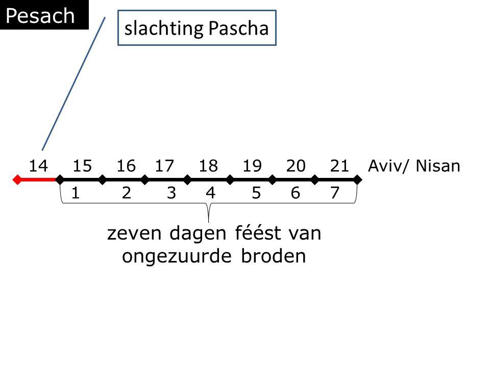 Pesach 14 15 16 17 18 19 20 21 Aviv/ Nisan 1 2 3 4 5 6 7 zeven dagen féést van ongezuurde broden slachting Pascha