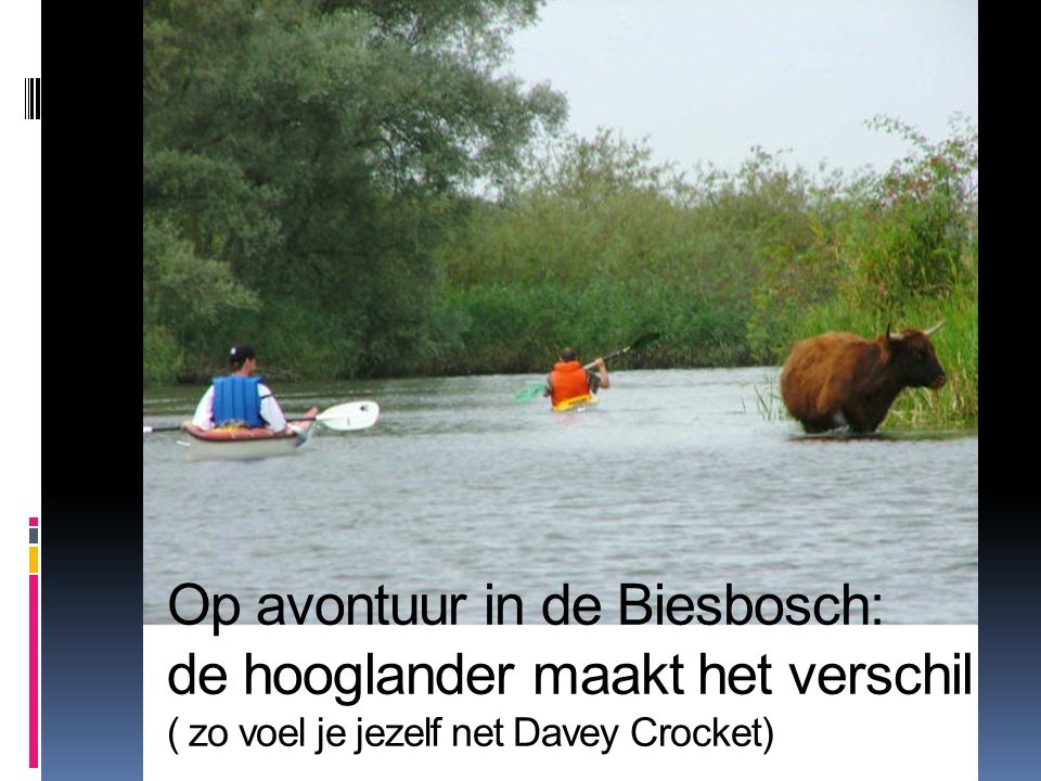 Op avontuur in de Biesbosch: de hooglander maakt het verschil ( zo voel je jezelf net Davey Crocket)