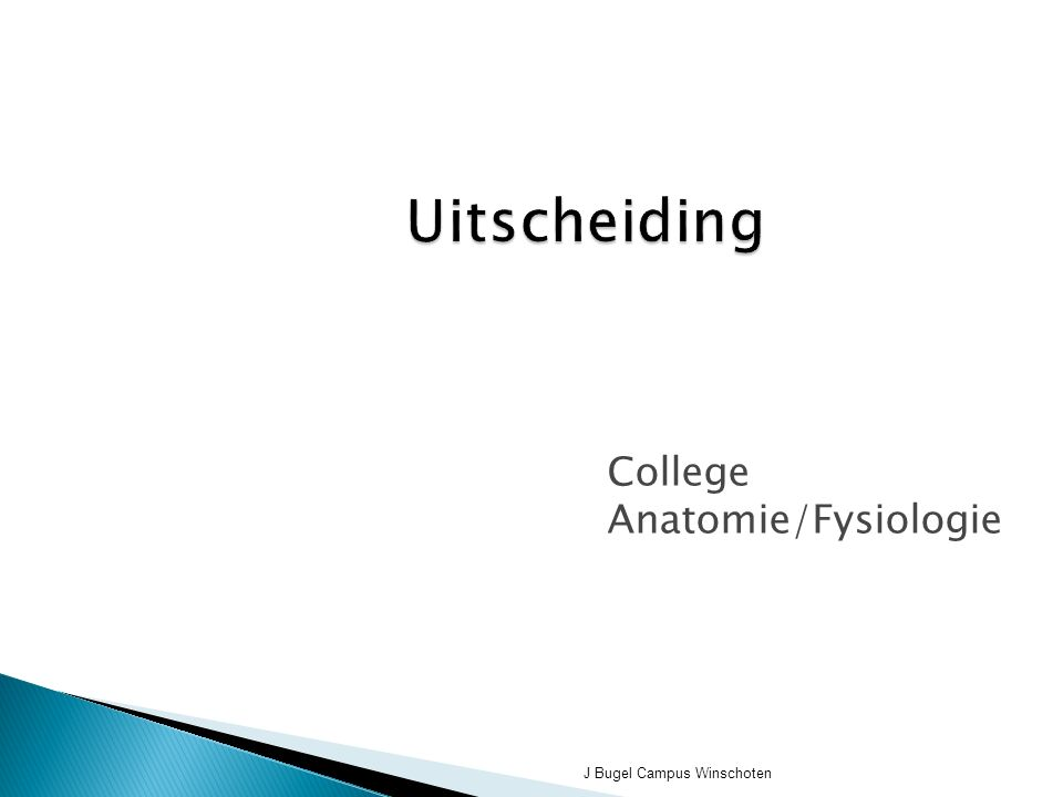 J Bugel Campus Winschoten Uitscheiding College Anatomie/Fysiologie
