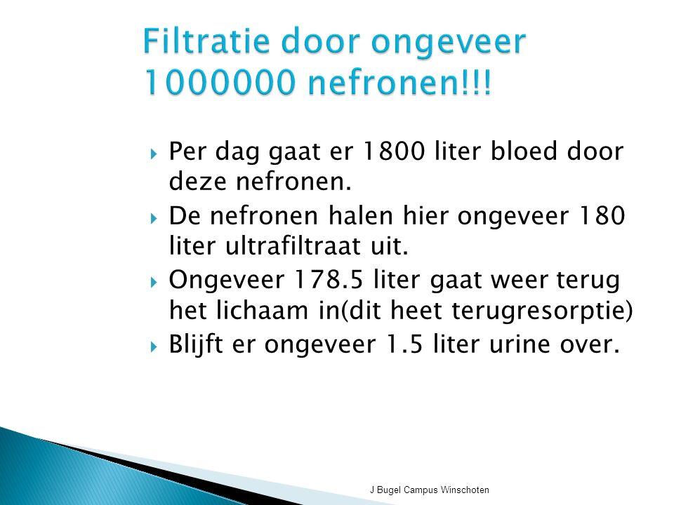 J Bugel Campus Winschoten Filtratie door ongeveer 1000000 nefronen!!.