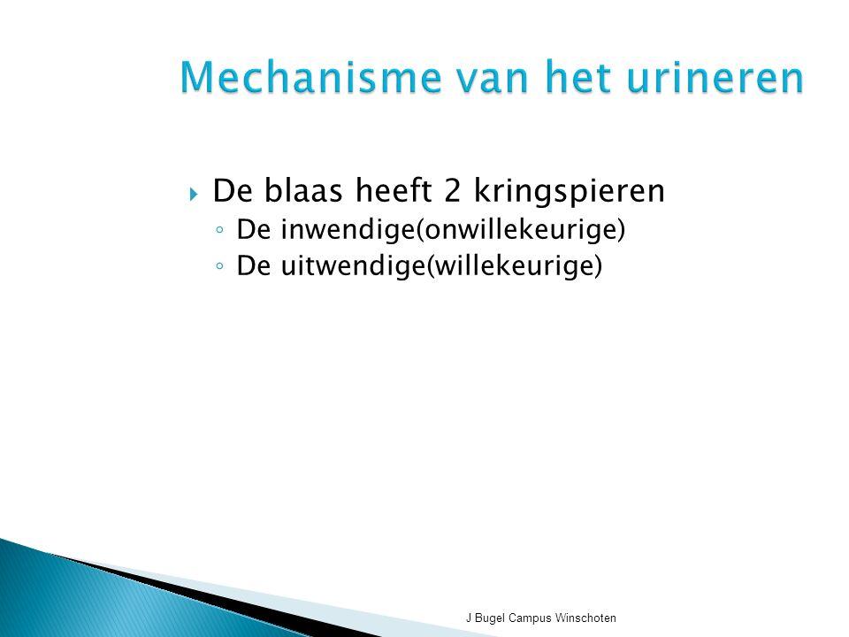 J Bugel Campus Winschoten Mechanisme van het urineren  De blaas heeft 2 kringspieren ◦ De inwendige(onwillekeurige) ◦ De uitwendige(willekeurige)