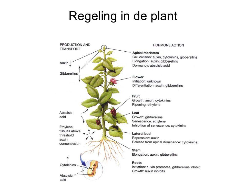 Regeling in de plant