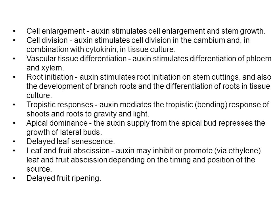 Cell enlargement - auxin stimulates cell enlargement and stem growth.