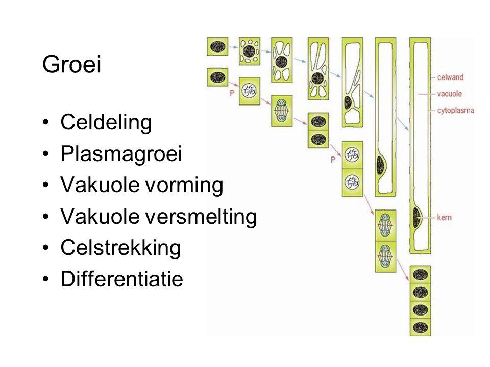 Groei Celdeling Plasmagroei Vakuole vorming Vakuole versmelting Celstrekking Differentiatie