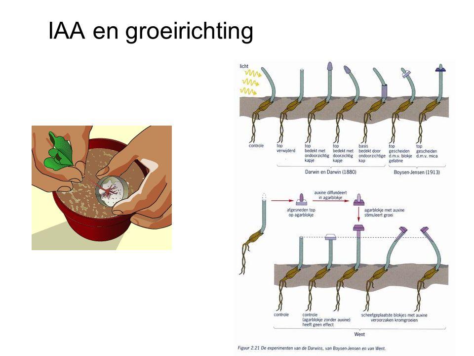 IAA en groeirichting