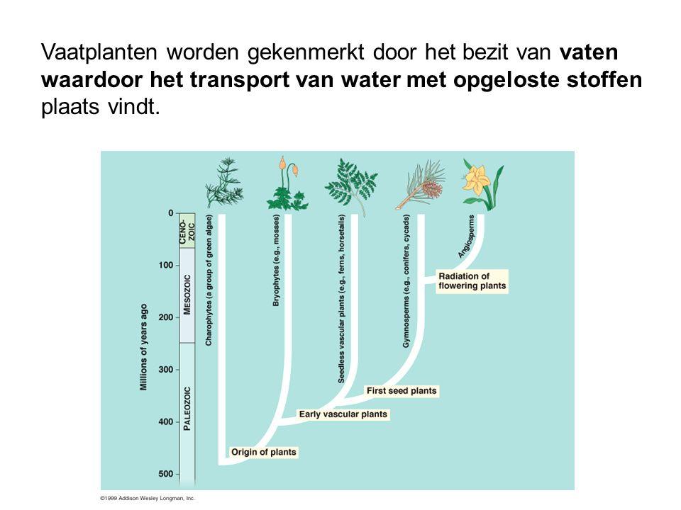 Vaatplanten worden gekenmerkt door het bezit van vaten waardoor het transport van water met opgeloste stoffen plaats vindt.