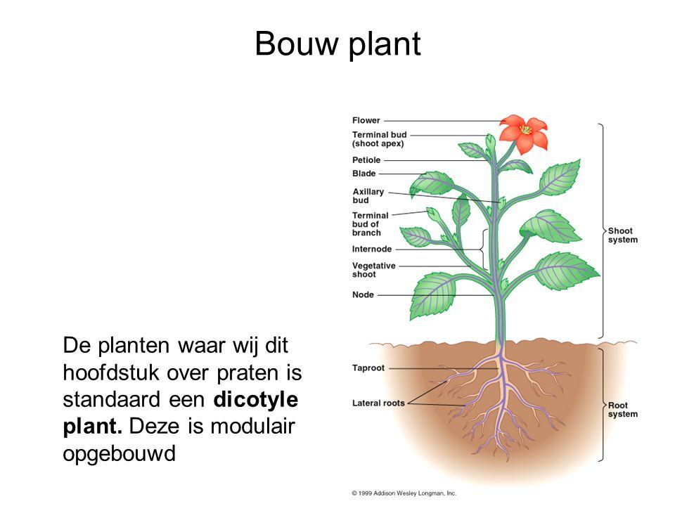 Bouw van de plant 2 Opperhuidweefsel: bescherming tegen uitdroging – Opperhuidcellen + cuticula – Kurk Transportweefsel: vervoer water + opgeloste stoffen –Houtvaten (xyleem) –Bastweefsel (floeem) Vulweefsel: opslag, vulweefsel, fotosynthese