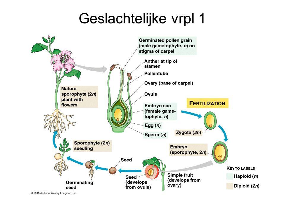 Processen de plant