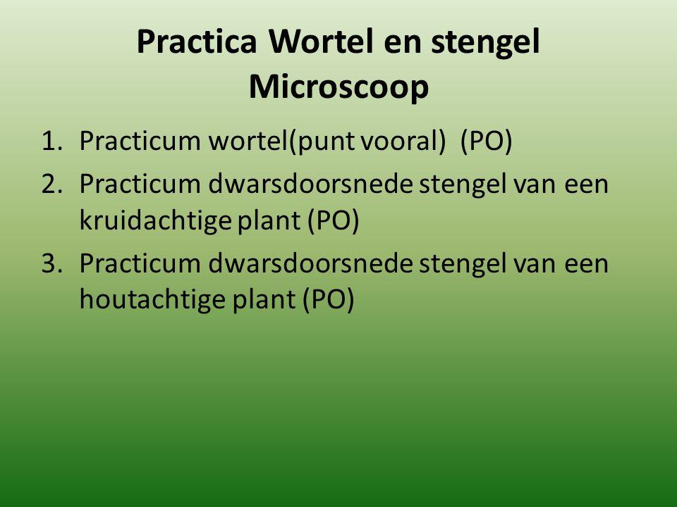 Practica Wortel en stengel Microscoop 1.Practicum wortel(punt vooral) (PO) 2.Practicum dwarsdoorsnede stengel van een kruidachtige plant (PO) 3.Practi