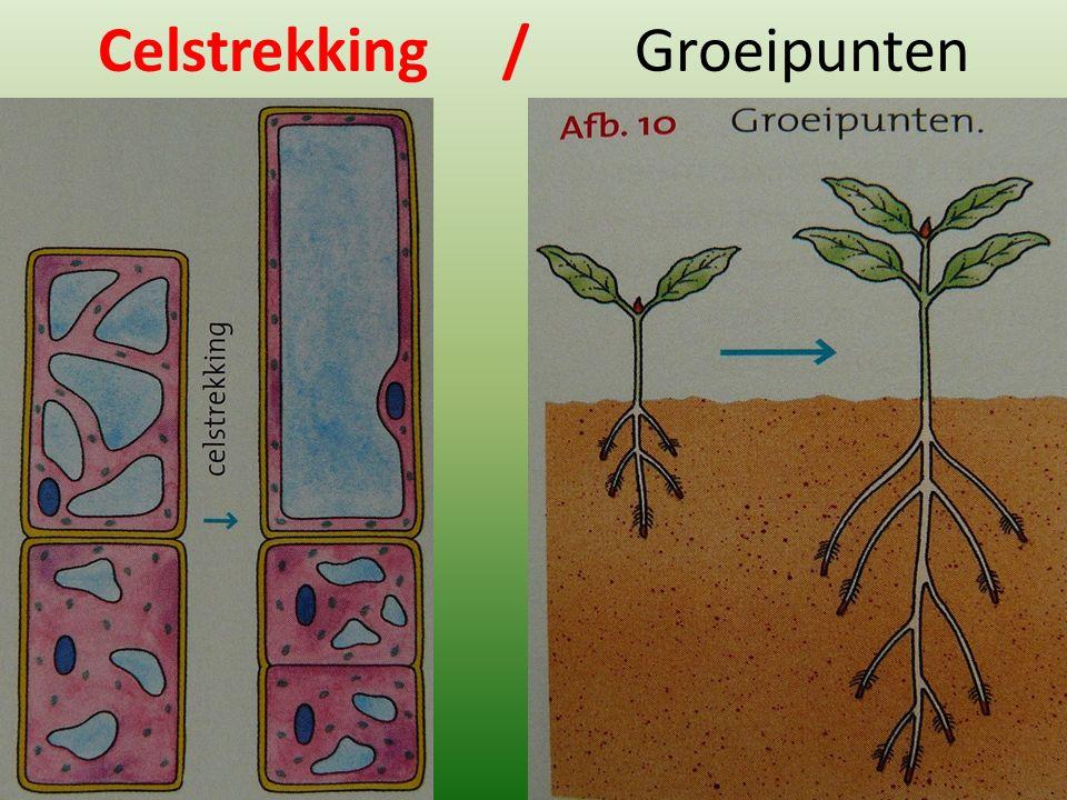 Celstrekking / Groeipunten