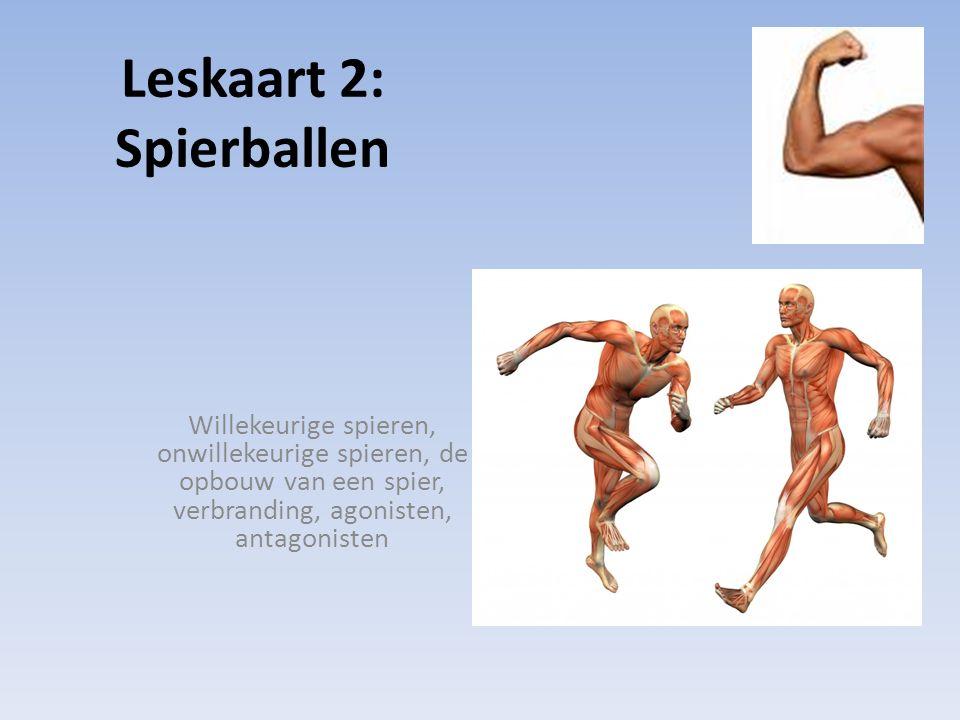 Leskaart 2: Spierballen Willekeurige spieren, onwillekeurige spieren, de opbouw van een spier, verbranding, agonisten, antagonisten
