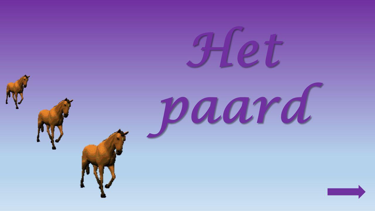 5.Vergelijk : werkpaard :rijpaard : zwaarlicht traagsnel sterk 6.Een paard eet graag : klaver, gras, wortels en haver