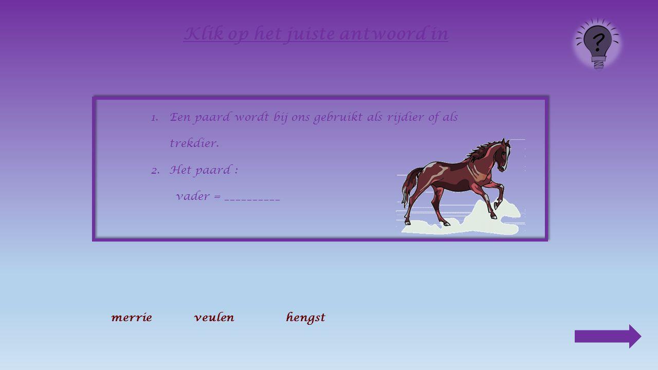 1.Een paard wordt bij ons gebruikt als __________ of als ______________.