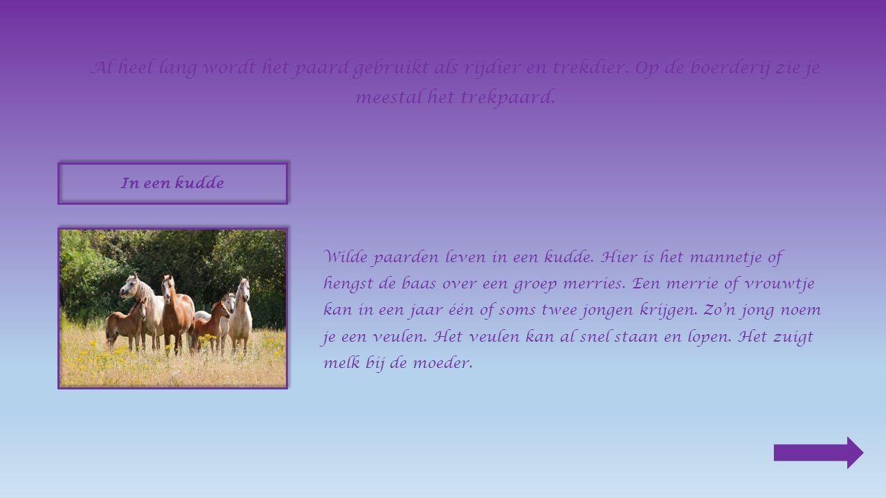 Een hapje haver Een paard eet graag klaver en gras, en ook wortels en haver.